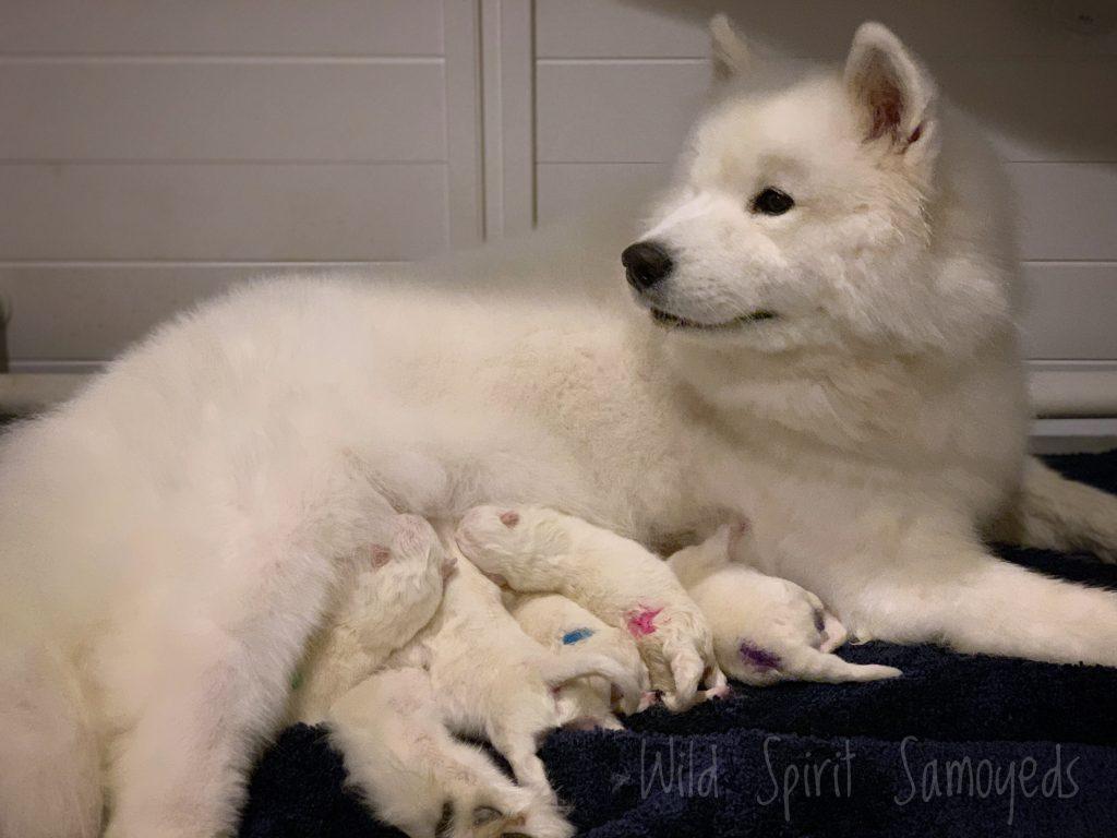 Mama Sadie and her babies