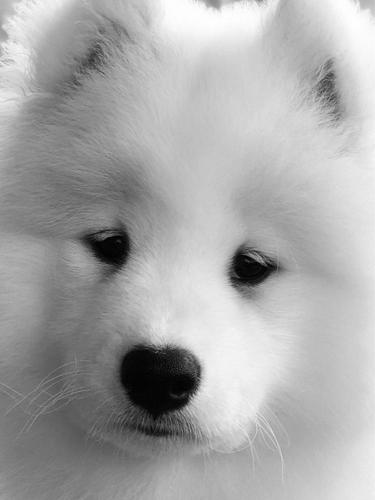 Heart-shaped nose.